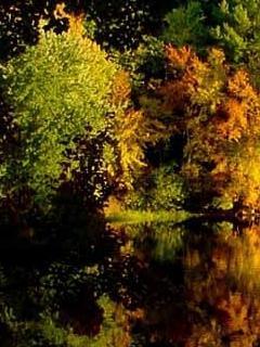 Autumn Scene Mobile Wallpaper