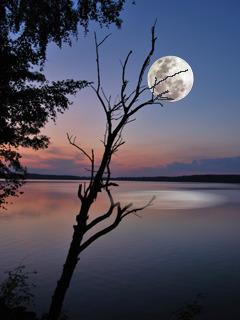 Moon And Lake Mobile Wallpaper