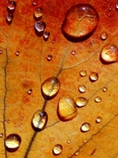 Orange Drops Mobile Wallpaper