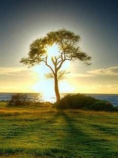 Tree Ans Sun Mobile Wallpaper