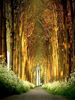 Big Trees Mobile Wallpaper