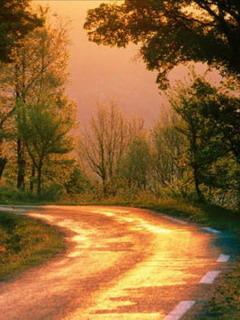 Silent Road Mobile Wallpaper