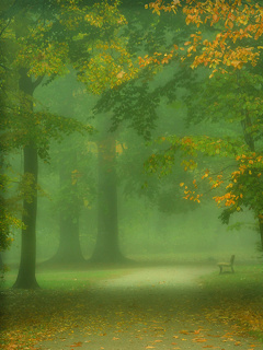Morning Green Nature Mobile Wallpaper