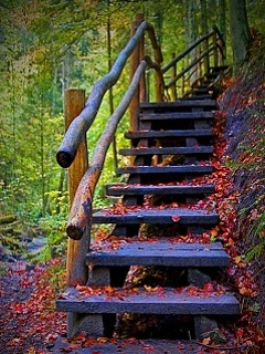 Steps In Nature Mobile Wallpaper