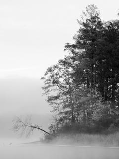 Mist Over Lake Mobile Wallpaper