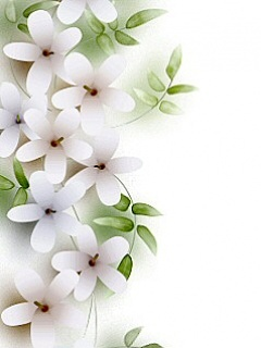 White Flowers Mobile Wallpaper