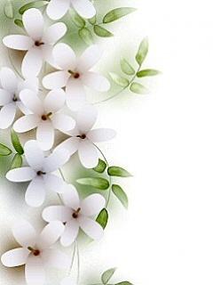 White Flowers Mobile Wallpaper