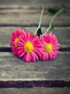 Lovely Flower Mobile Wallpaper