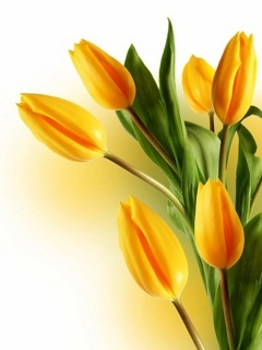 Yellow Tulips Mobile Wallpaper