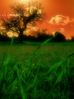 Orange And Grass Mobile Wallpaper