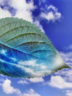 Sky Leaves Mobile Wallpaper