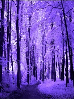 Purple Forest Mobile Wallpaper