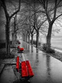 Rain Day Mobile Wallpaper