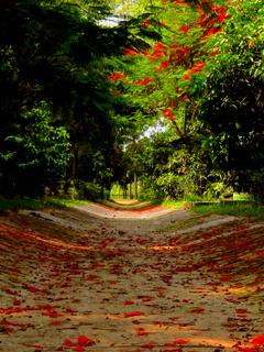 Love Path Mobile Wallpaper
