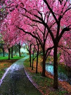 Pink Tree Mobile Wallpaper