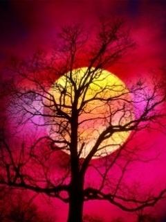 Moon Behind Tree Mobile Wallpaper