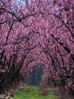 Pink Garden Mobile Wallpaper