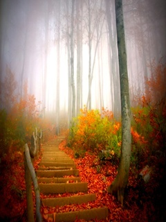Autumn Fogg Mobile Wallpaper