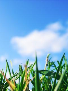 Grass And Sky Mobile Wallpaper