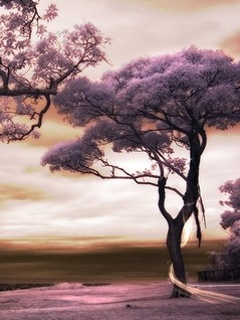 Alone Tree Mobile Wallpaper