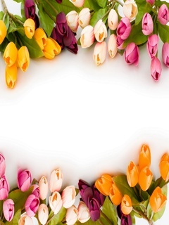 Romantic Tulip Mobile Wallpaper
