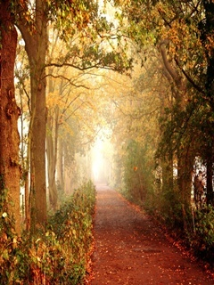 Autumn Walk Mobile Wallpaper