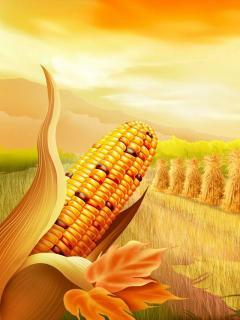 Corn Mobile Wallpaper