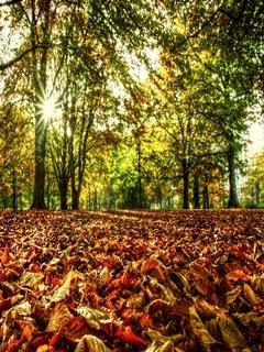 Autumn Suns Mobile Wallpaper