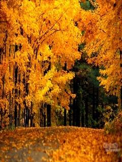 Golden Fall Mobile Wallpaper