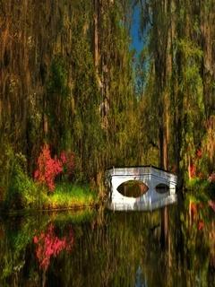 Garden Lake Mobile Wallpaper