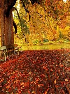 Autumn Nature Mobile Wallpaper