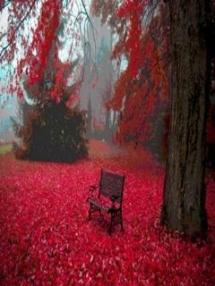 Red Carpet Mobile Wallpaper