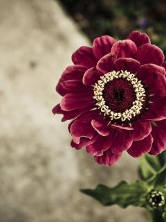 Wonderful Flower Mobile Wallpaper