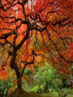 Big Tree Autumn Mobile Wallpaper