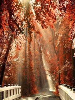 Autumn Sun Mobile Wallpaper