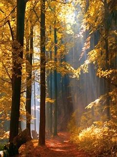 Autumn Wood Mobile Wallpaper