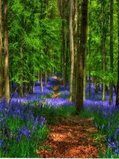 Forest Flower Mobile Wallpaper