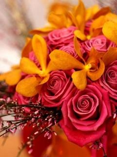 Lovely Roses Mobile Wallpaper