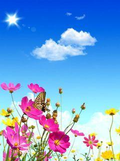 A Lovely Flowers Mobile Wallpaper
