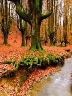 Autumn Trees Mobile Wallpaper