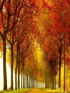 Tree Walk Mobile Wallpaper