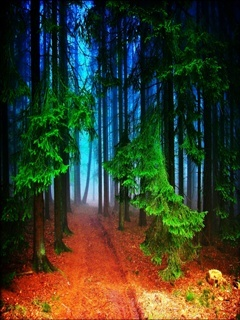 Blue Forest Mobile Wallpaper