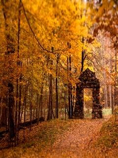 Beautiful Autumn Mobile Wallpaper