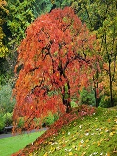 Autumn Tree Mobile Wallpaper