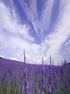 All Purple Mobile Wallpaper
