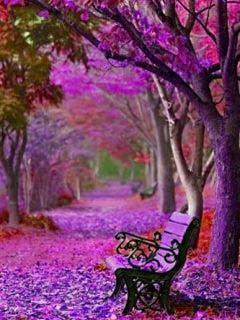 Puple Bench Tree Mobile Wallpaper