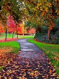 Cute Autumn Mobile Wallpaper