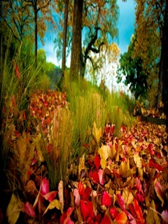 Autumn Grass Mobile Wallpaper