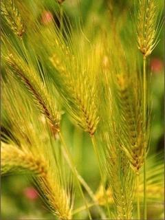 Grain Mobile Wallpaper