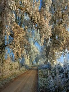 Frozen Tree Mobile Wallpaper